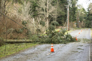 Power outage caused by a fallen tree