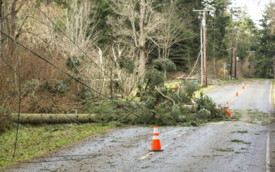 Fixing Surging Power Outages Caused by Fallen Trees/Branches